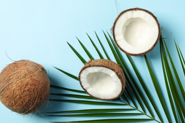 coconut palm branch blue table top view 185193 15234