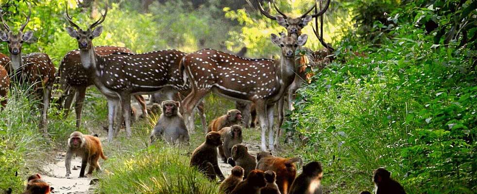 Jim Corbett National Parkpic with deer